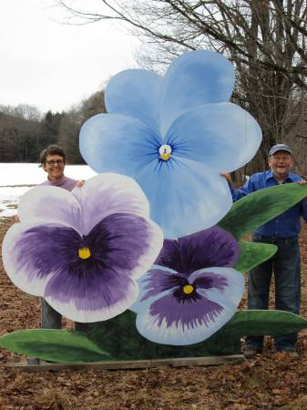 giant pansies steve laurel